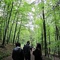 通過森林前往城堡
