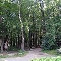 三國交界處的森林