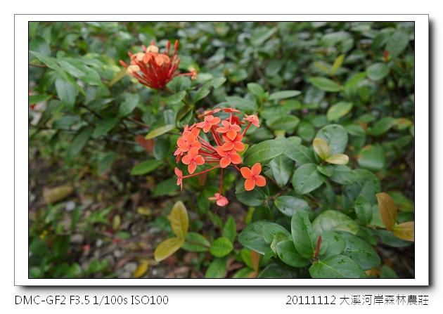 P1030214.jpg