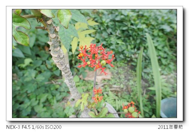 DSC00609.jpg
