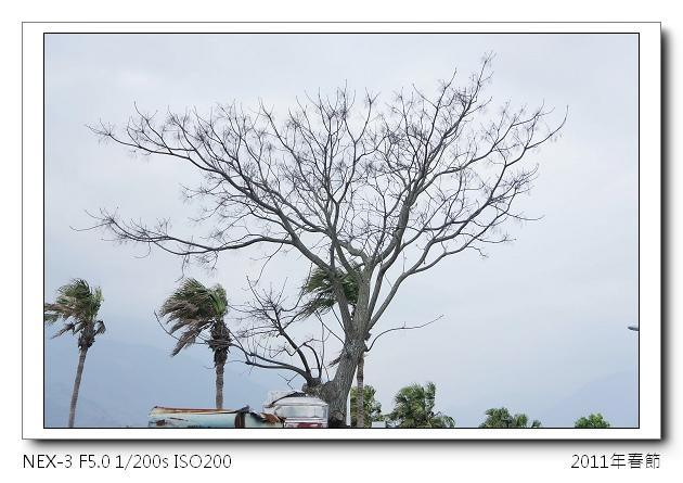 DSC01436.jpg
