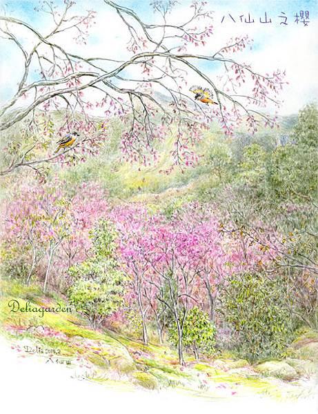 八仙山之櫻deliagarden2014
