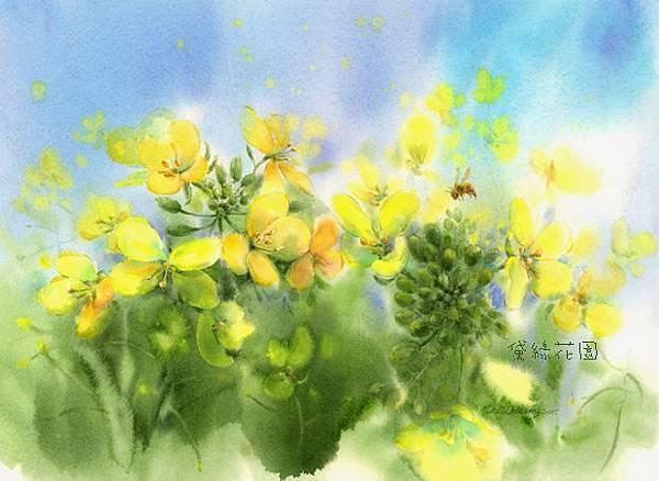 油菜花deliagarden2015