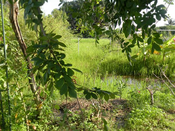 2.大雨後池子滿水了.jpg