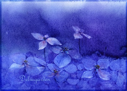 紫陽s.jpg