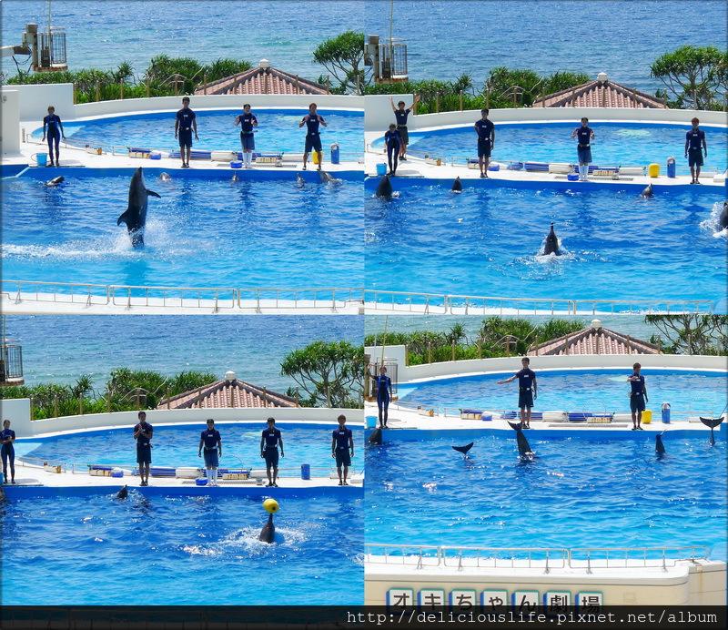 海豚表演-01