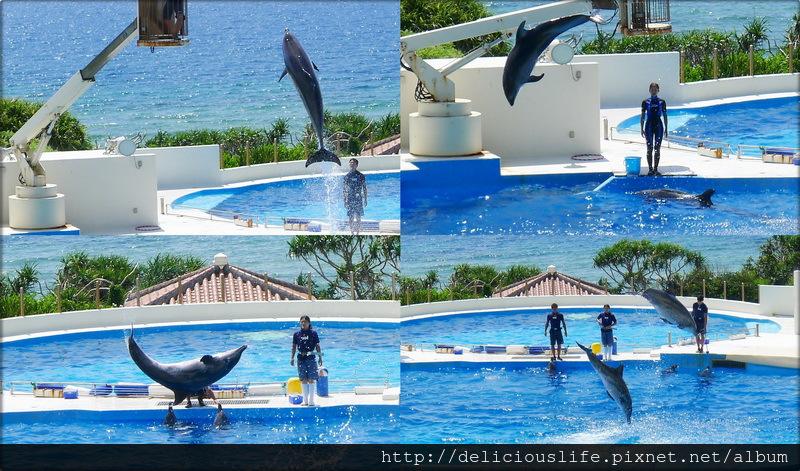 海豚表演-02