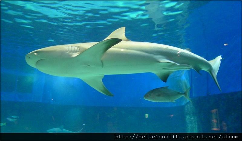 水族館鯊魚-01