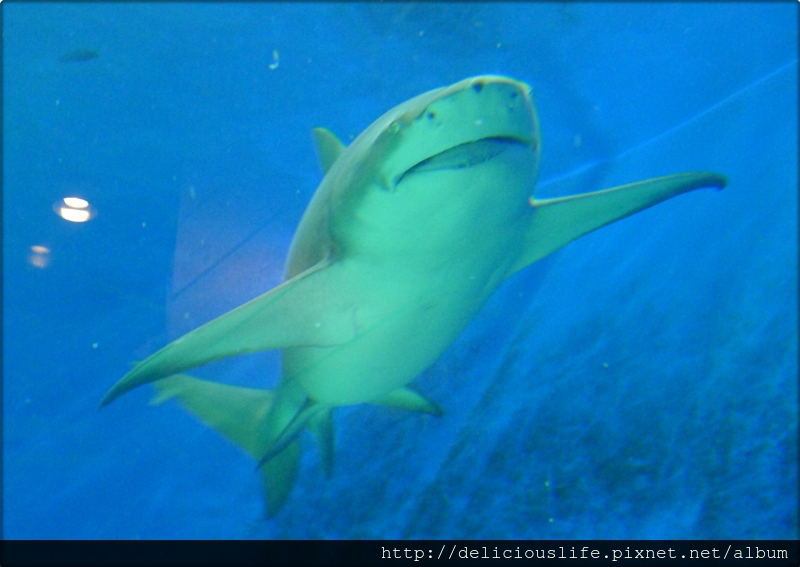 水族館鯊魚-02