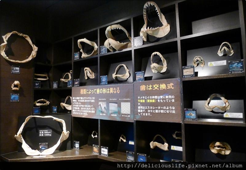 水族館鯊魚介紹-01