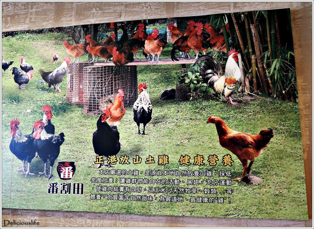 番割田甕缸雞-5