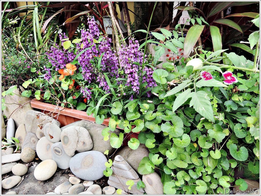 the rock garden-4
