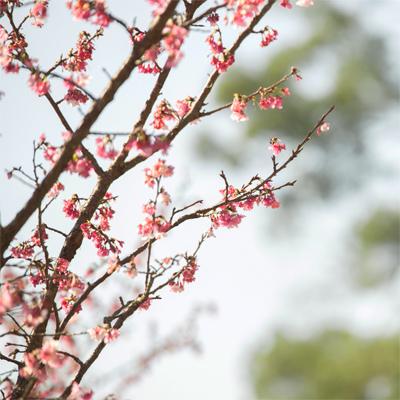 s_photo_1.jpg