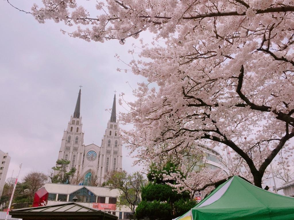韓國自由行 首爾逛街 大邱看櫻花 春川腳踏車 景福宮韓服