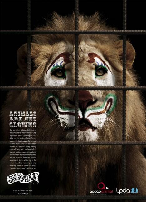 lion_thumb.jpg