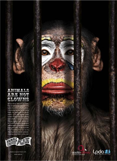 chimp_thumb.jpg