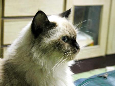 我的Hera,我生命中的首位貓女王