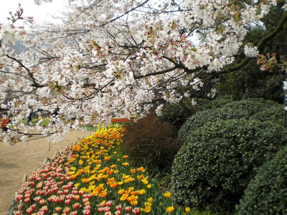 鬱金香花季