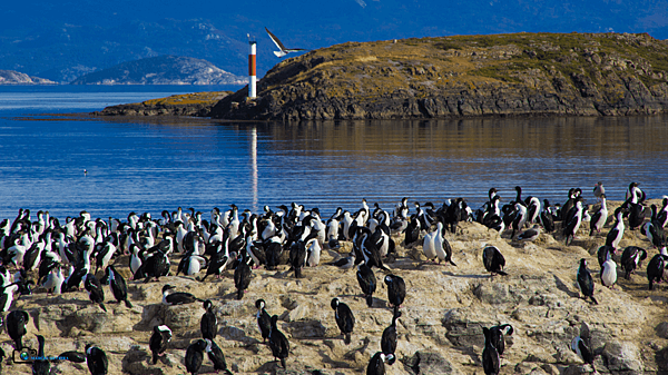 caminhada_com_pinguins.png