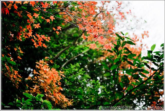 IMG_0532_s01.jpg