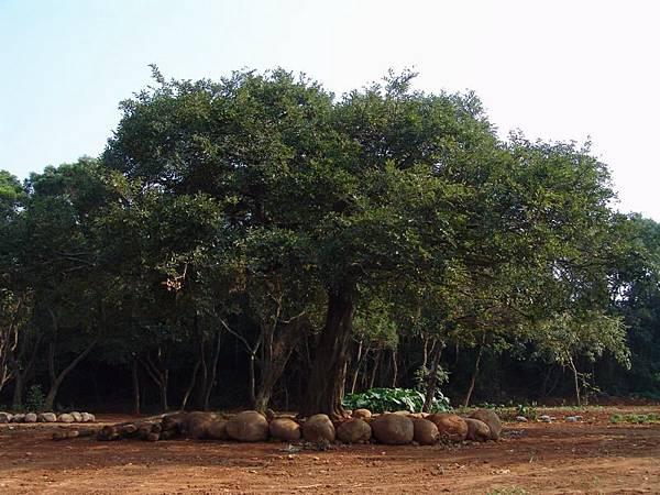 似曾相似的樹