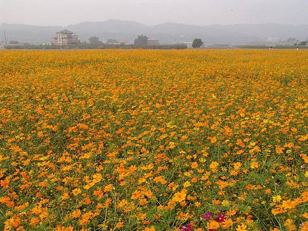 悠閒的農野