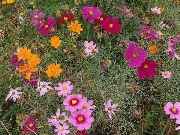 完全綻放的各色花
