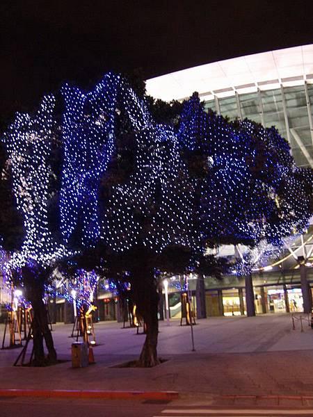 臨走一拍最大的一棵樹