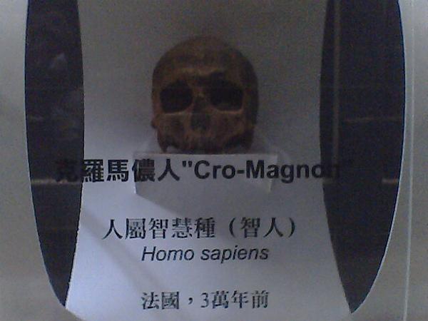 頭骨-克羅馬儂人.jpg