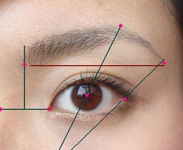 眉頭的開端在鼻梁和眼頭連線的中心點沿線上。