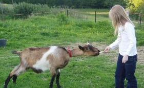 feed-the-goat.jpg