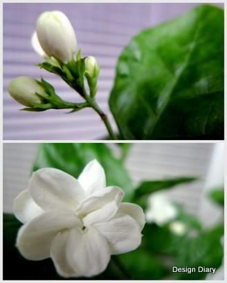 980427富錦街下午茶.jpg