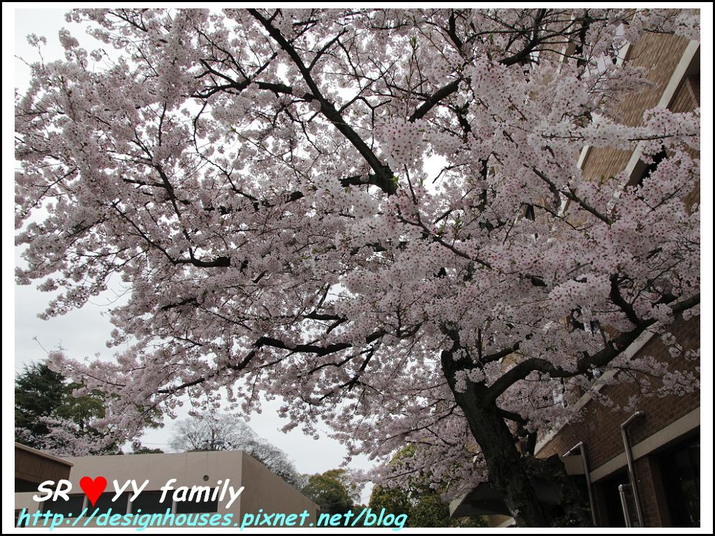 舞鶴花園-賞櫻14.jpg