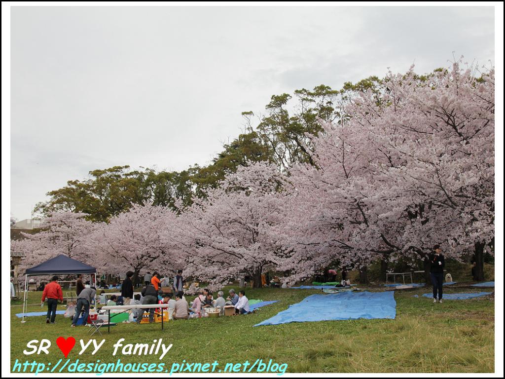 舞鶴花園-賞櫻19.jpg