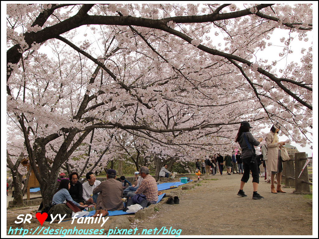 舞鶴花園-賞櫻44.jpg