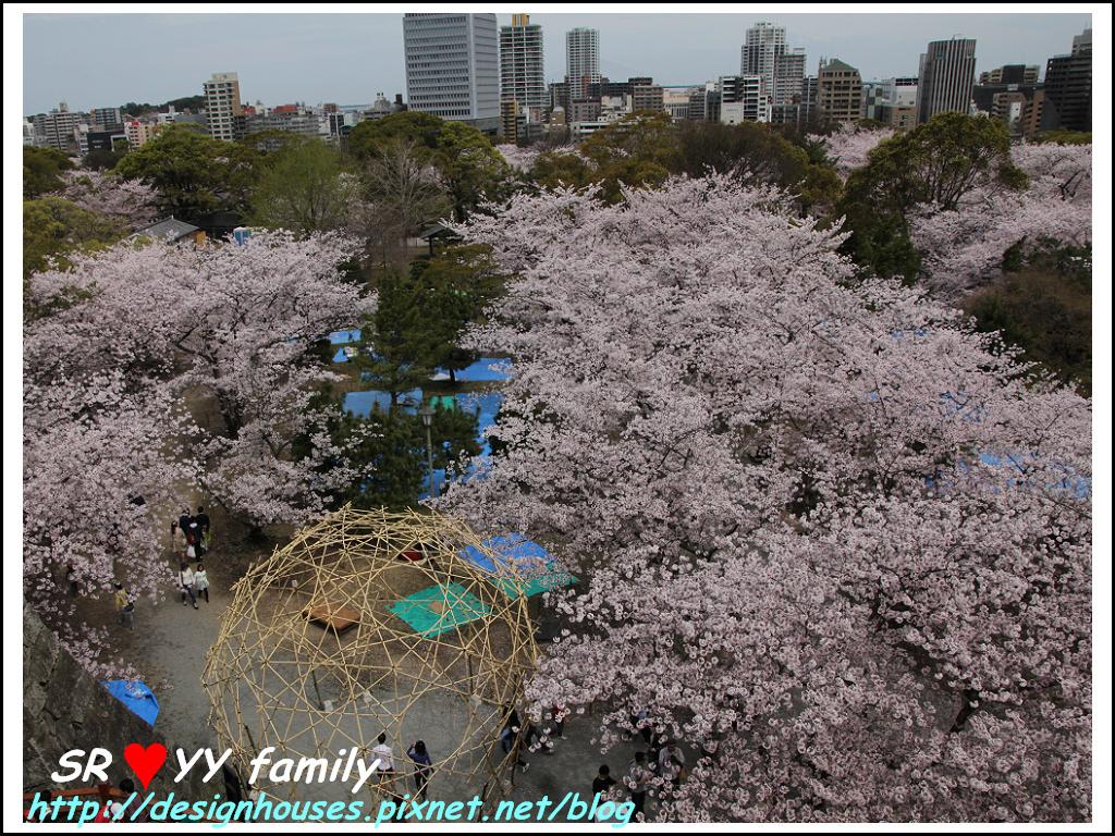 舞鶴花園-賞櫻63.jpg