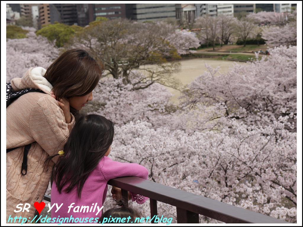 舞鶴花園-賞櫻67.jpg