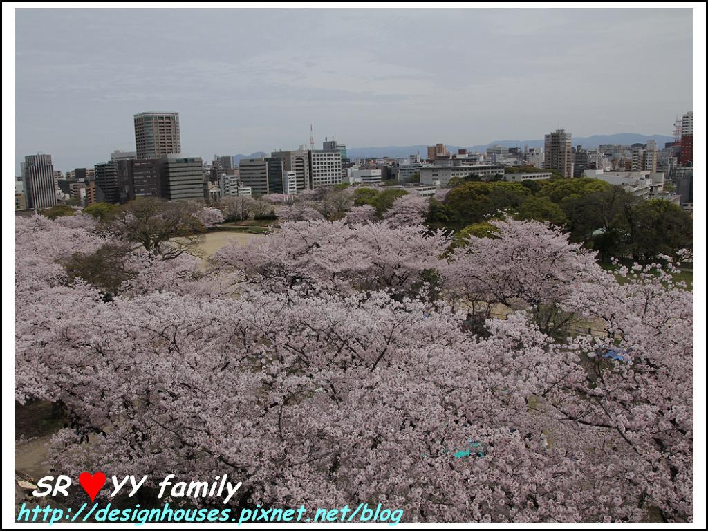 舞鶴花園-賞櫻68.jpg