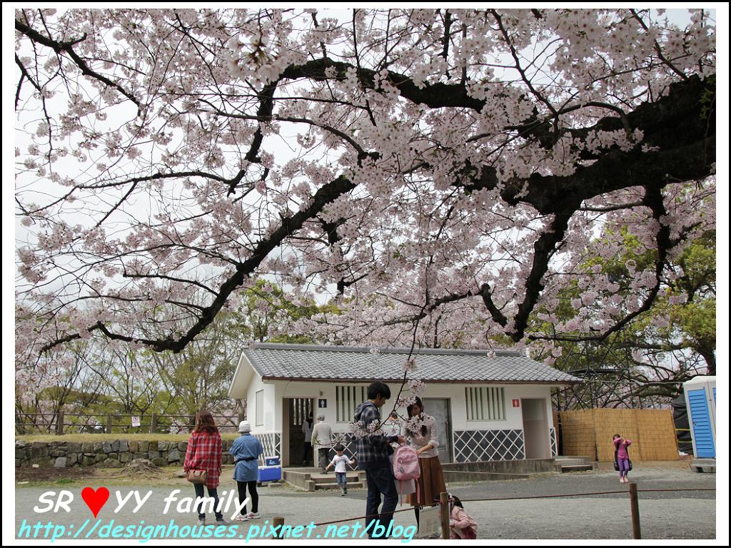 舞鶴花園-賞櫻94.jpg