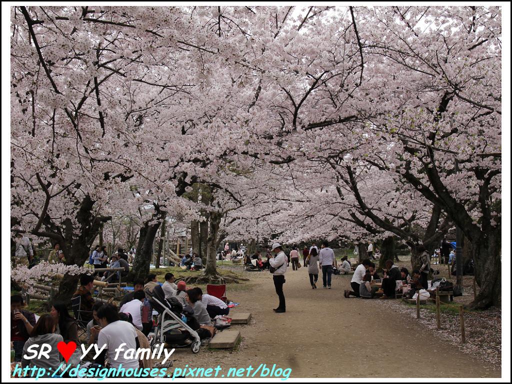 舞鶴花園-賞櫻106.jpg