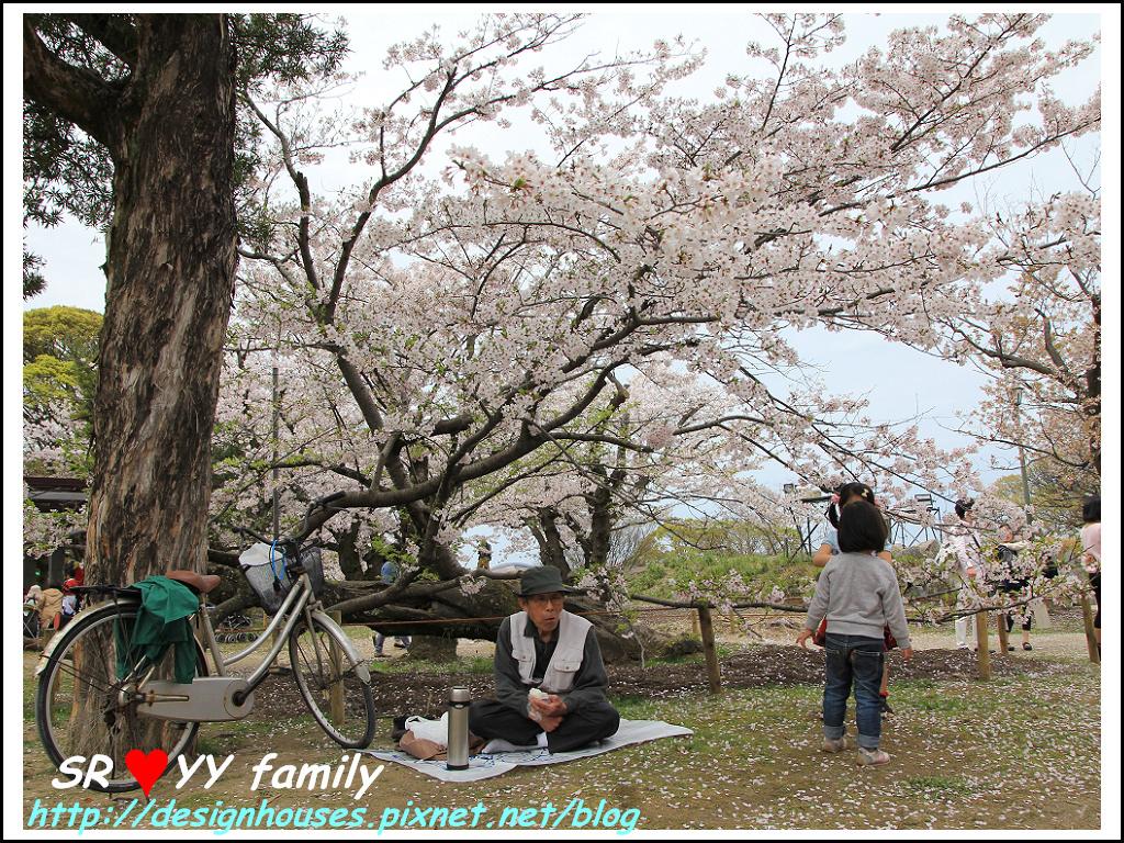 舞鶴花園-賞櫻128.jpg
