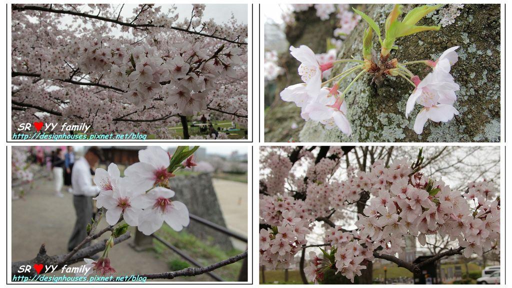 舞鶴花園-賞櫻P7