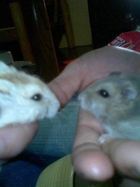 班比和小胖胖好像在相親