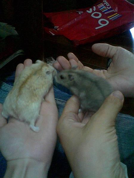 班比和小胖胖