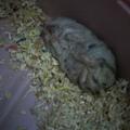 睡相很差的小胖胖