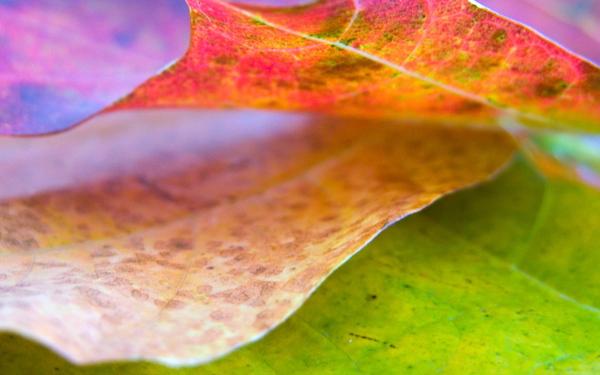 00790_leaf8_1280x800.jpg