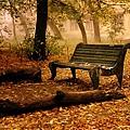 Old_Bench.jpg