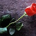 a_Red_Rose.jpg