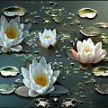 Hardy_White_Water_Lillies.jpg