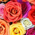 Love_Blooms_Roses%2C_Bunch_Of_Flowers.jpg